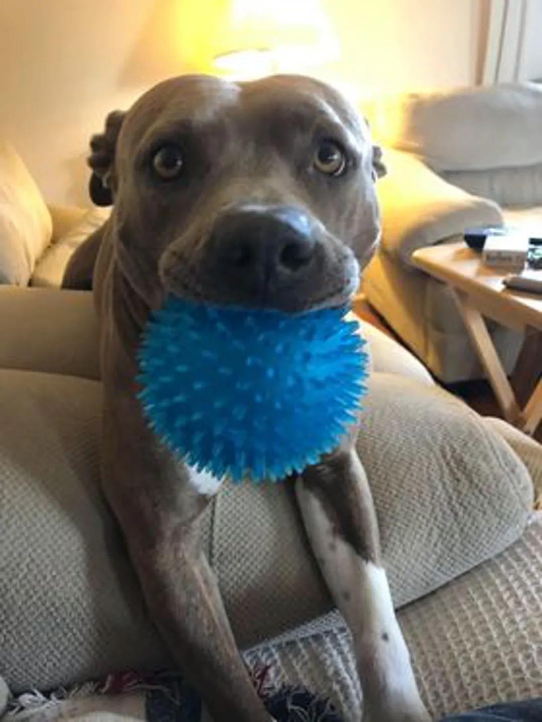 主人找到失踪9个月的狗狗,原因竟是因为一个玩具