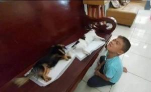 绝育完麻醉还没退,小主人以为狗死了,直接哭到崩溃瘫地
