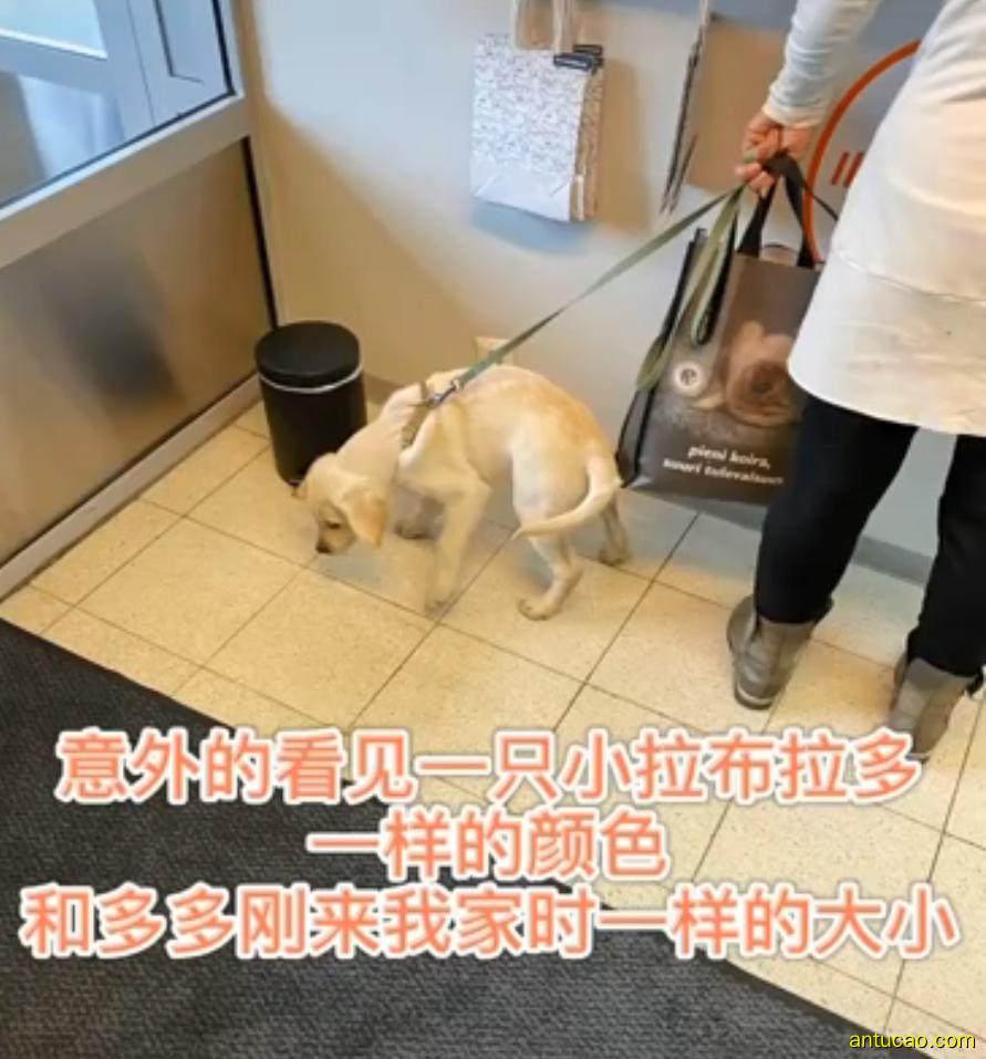 狗狗去世后,她忍痛到医院捐赠狗粮,竟遇见长得一摸一样的它