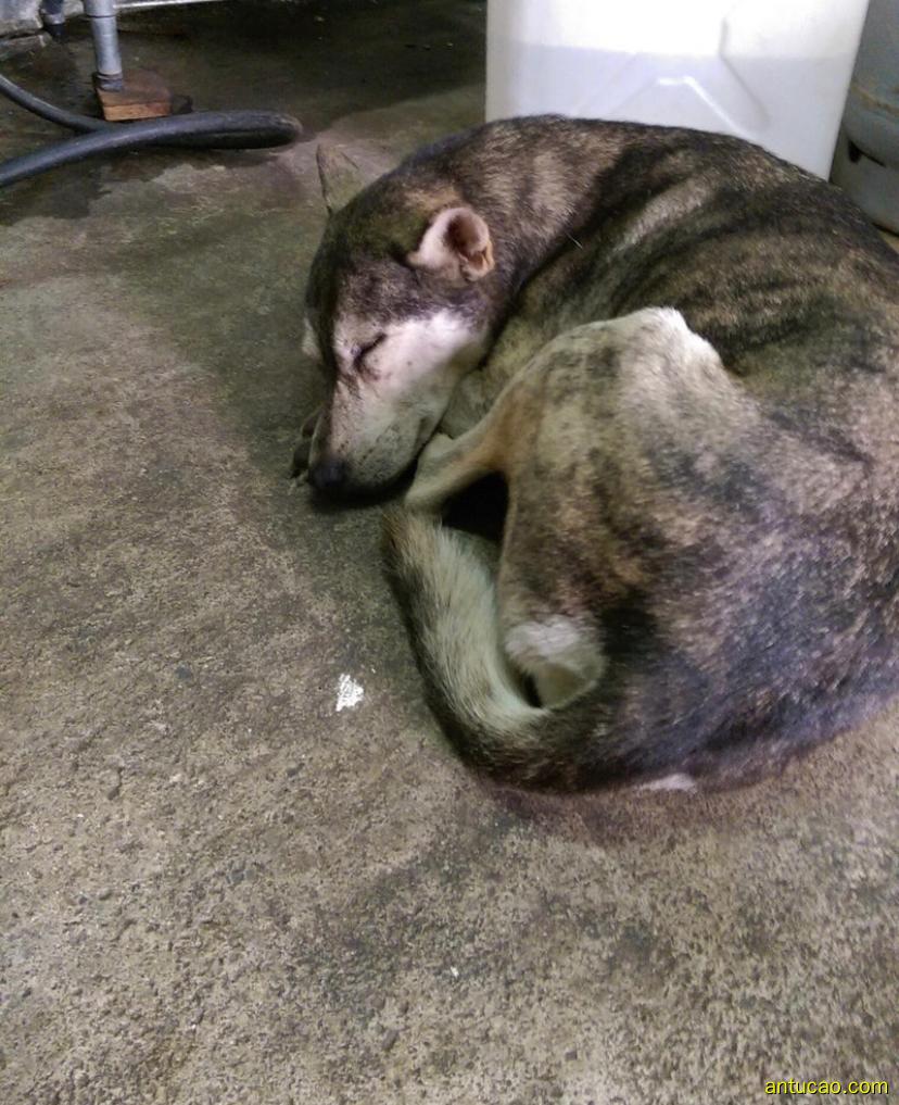 邻居搬家后留下一只狗,有天我突然发现它失踪了