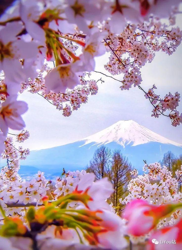 樱花的记忆-优你所想-樱花