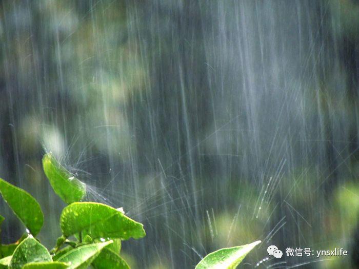 那年杏花微雨-优你所想-雨