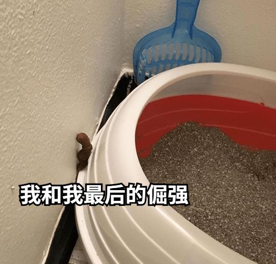 猫把屎拉在天花板上,我tm真想把家给拆了