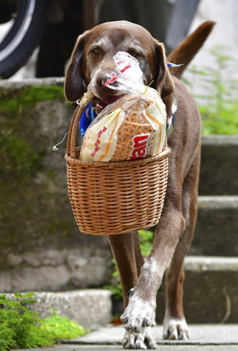 """顾客呼叫了超市的""""配送服务"""",结果来了一只狗!"""