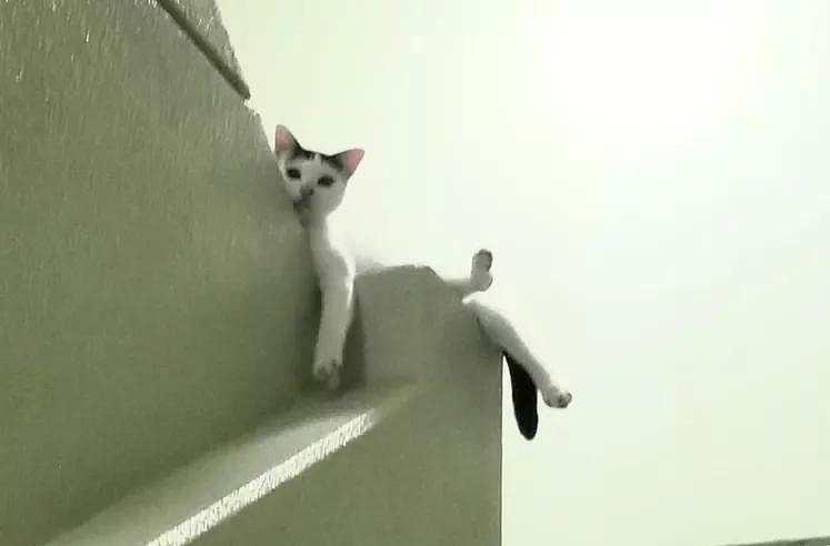 流浪猫被我带回家之后,看我的眼神就像欠了它几千万