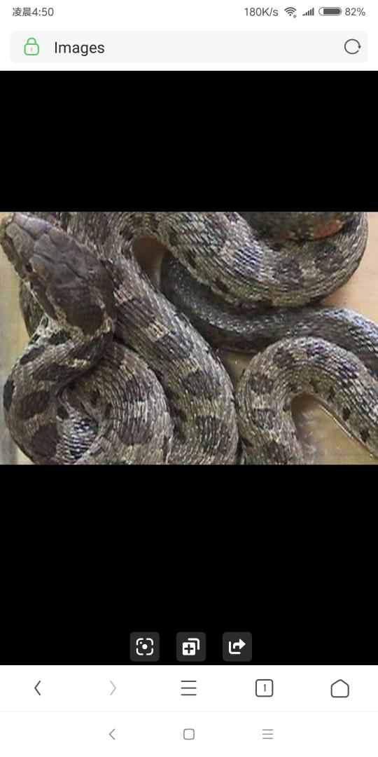凌晨三点院子里的蛇