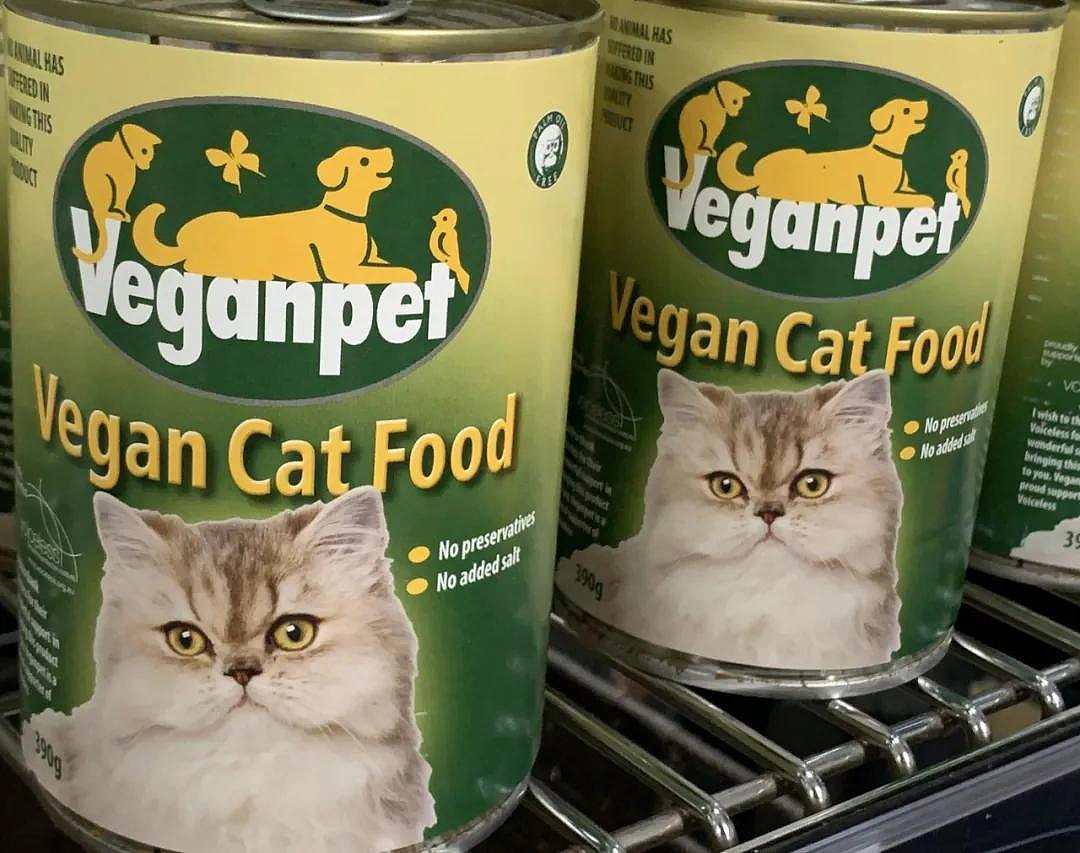疯了!素食主义女朋友逼我扔掉我的猫,竟是因为它吃肉