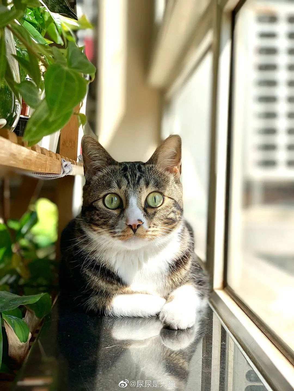 """千万粉网红猫""""尿尿""""是如何养成的?我们和尿爸聊了聊背后的故事"""