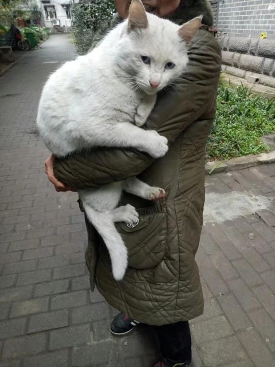 毒辣的大白猫