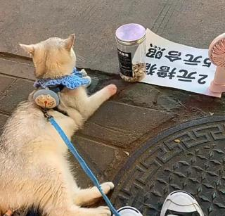 生活不易,宠物也被迫摆摊