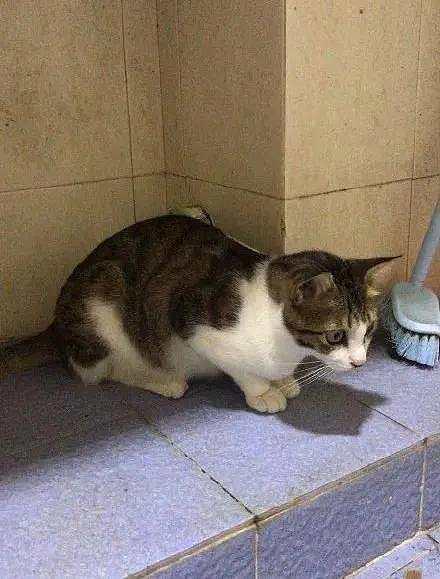 能管管猫吗?我们想上厕所