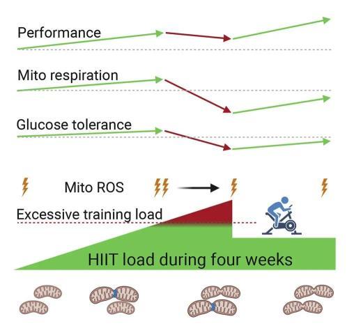 运动越多越好?过量了能把你某些肌肉都溶解掉!