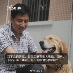 """""""国际导盲犬日"""",请给导盲犬多一些关怀和理解"""