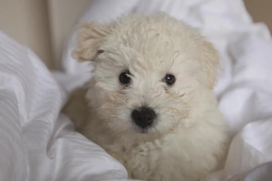 小狗长得像拖把,遭人嫌弃,洗完澡后真实身份吓呆众人