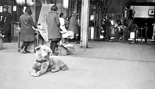 日综首次曝光《忠犬八公》 背后不为人知的故事