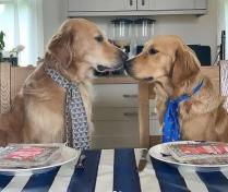 """千万不要养两只狗,不然家里每天都是""""酸味"""""""