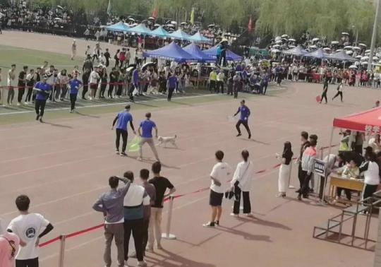 那只在大学里一战成名的网红狗,今年又来参加运动会了!