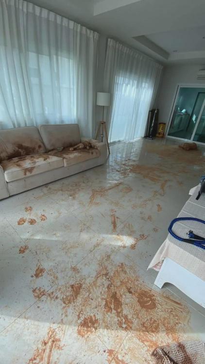 金毛半夜跑出去淋雨,铲屎官起床看到客厅后…瞬间崩溃