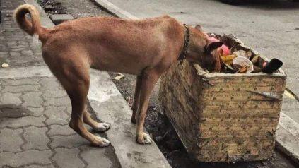 国外女子在后院放了一盆水,随后发生的故事…太神奇了!