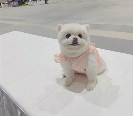 看到关晓彤给狗起的名字,网友狂笑:比我还敷衍哈哈哈!