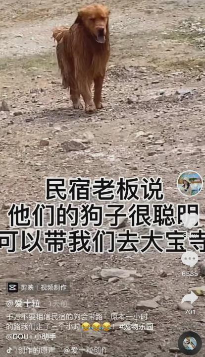 """""""民宿老板让狗带我去景区,结果…差点把我坑死!"""""""
