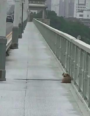 女子欲跳桥自杀,看到拆弹犬摔跤后狂笑:我不跳了