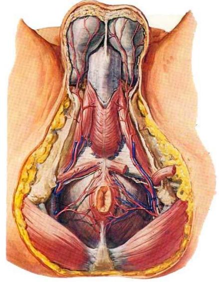 久坐、憋尿、经常骑车……你们考虑过前列腺的感受吗?