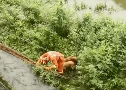 两只金毛被困河道,被消防员救出时的画面暖翻网友