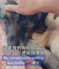 搜爆犬退役后患上抑郁症,主人想了一个好办法