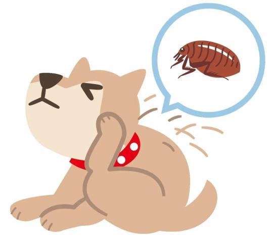 夏天被虫咬,可不止红肿瘙痒,严重的能致命