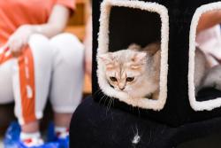 悄然兴起的千亿级市场,得邑宠物集助力宠物经济崛起