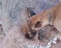 宝宝去世后,狗妈妈悲痛欲绝,主人:它已经绝食5天了