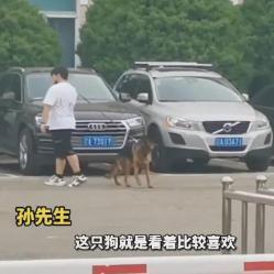 54只退役警犬全部找到新家,其中一只小德牧拍出33万天价