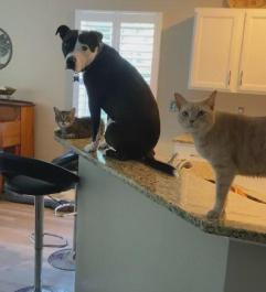 把狗跟猫放一块养,家里多一只猫