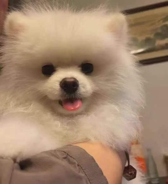 """""""我把狗狗送去洗澡,却被宠物店活活勒死!!"""""""