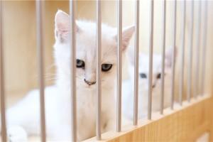 缔造高品质人宠生活   圣宠宠物&猫有家上海旗舰店盛大开业