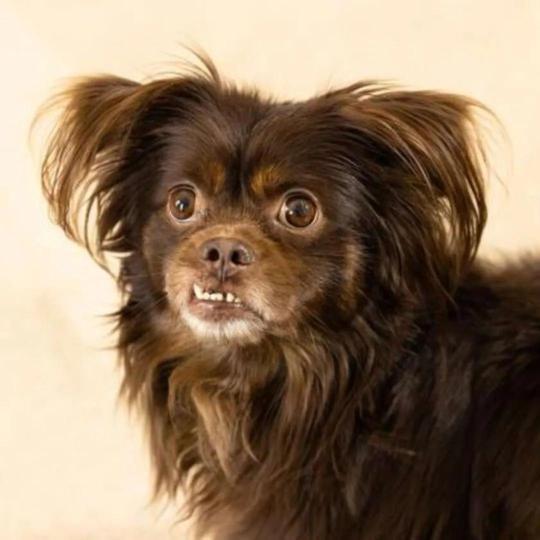 狗子失踪两年后,主人突然听到它的声音…