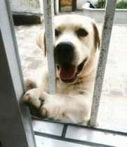 偷摸我狗的人见过很多,但隔着墙偷摸的还是第一次见
