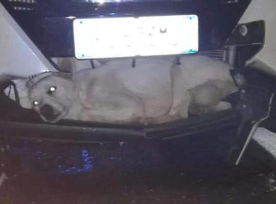 时速128公里的车撞到了一只流浪狗,它获救的方式…太神奇了!