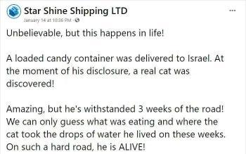 乌克兰小猫咪被困集装箱3周,在缺水缺食物的环境下,活下来了